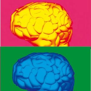 Neuroeconomía y neuromarketing, cómo activar la decisión de compra
