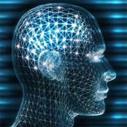 Curso de Neurociencias en la UNIA: