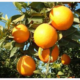 Los anuncios de zumo de naranja, en el ojo del huracán
