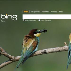 Bing logra el segundo puesto entre los buscadores