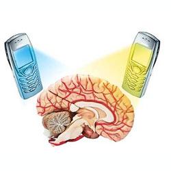 El cerebro sí responde a la radiación de los móviles