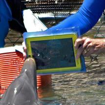Hasta los delfines usan el iPad