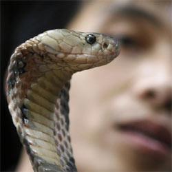 Una cobra desaparecida en un zoo de Nueva York salta al estrellato en Twitter
