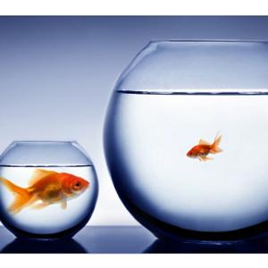 Empezar en una pequeña agencia puede favorecer a tu carrera