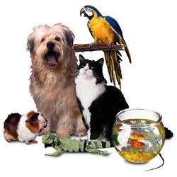Amazon lanza un servicio de e-commerce para mascotas