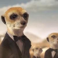 Renault se corona rey de los suricatas en su spot