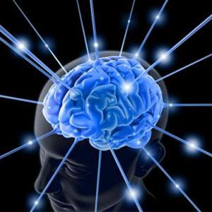 Los 6 estímulos clave para llegar al cerebro primitivo del consumidor