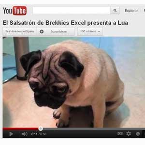Una aplicación traduce el pensamiento de su perro