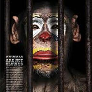 El maltrato animal también se da en las campañas de publicidad