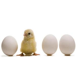 Qué es la experiencia del cliente, ¿el huevo o la gallina de las marcas?
