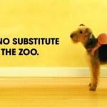 """30 ejemplos divertidos de publicidad muy """"perra"""""""