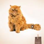 43 anuncios de gatos en los que la creatividad saca las uñas