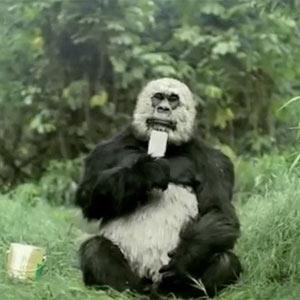 En la publicidad los gorilas quieren ser osos panda
