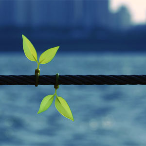 15 razones por las que el marketing digital no está echando brotes verdes en su empresa