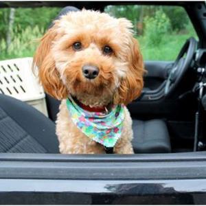 Los propietarios de mascotas, un mundo lleno de oportunidades para las marcas