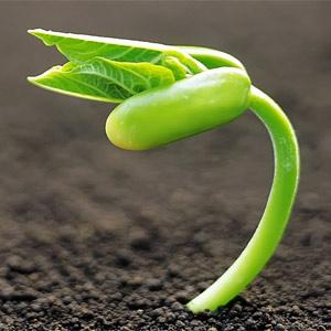 La inversión publicitaria global echará menos brotes verdes de los esperados en 2013, según GroupM