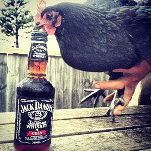Celebre con Jack Daniel's el cumpleaños de Mr. Jack a través de Instagram