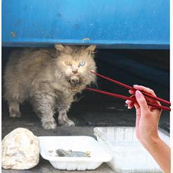 ¿Gato por liebre? Una campaña pretende acabar con el problema del consumo de perro y gato