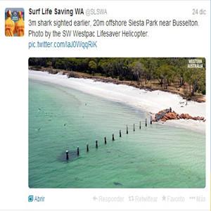 Ahora, los tiburones australianos alertarán vía Twitter a los bañistas cada vez que se acerquen a la costa