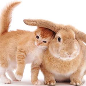 10 consejos para que no le den gato por liebre en rebajas