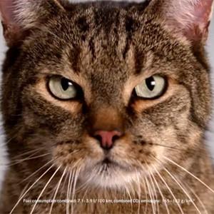Mercedes-Benz se contagia del amor de los internautas por los gatos en un spot muy