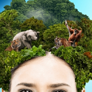 Greenpeace acusa a P&G de la deforestación de bosques tropicales para elaborar sus productos