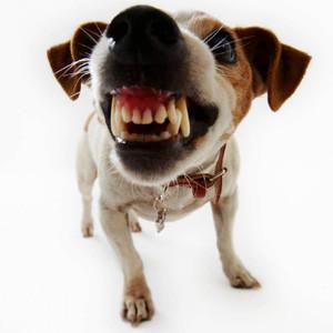El culpable de su humor de perros podría ser Facebook