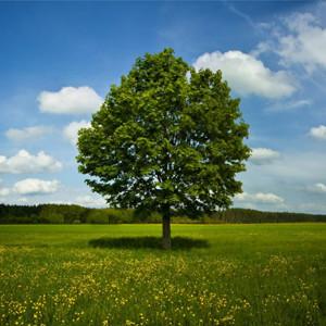 Ver vídeos pornos por el medio ambiente: por cada 100 visitas, un árbol nuevo