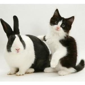¡Que no le den gato por liebre en el m-commerce! Comprar en el móvil puede ser un 250% más caro que en el PC