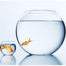 Las pymes encuentran problemas para lanzarse al e-commerce, ¿acabarán siendo engullidas por los peces gordos?