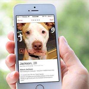 Una organización de acogida de animales de Nueva York publica perfiles de perros en la app de citas Tinder