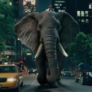 140810_funky_elephant_b_652