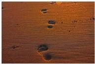 4 pasos para una venta – Marcelo Lamas
