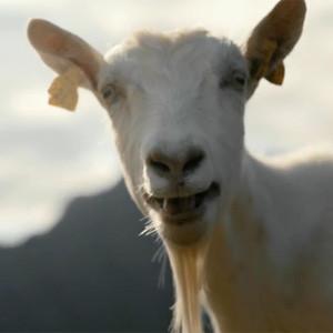 Si creía que lo había visto todo en publicidad chiflada, no se pierda a esta cabra cantando