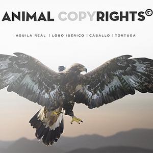 Animal Copyrights, el mundo visto por primera vez desde la óptica de los animales