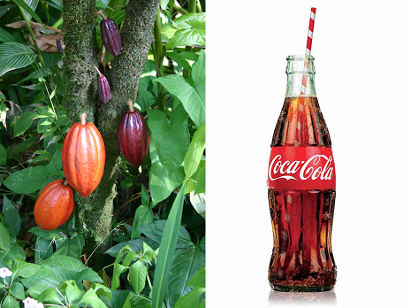 how to buy a coca plant