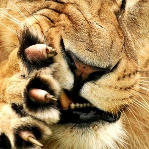 ¿Qué marcas están sacando más las garras en Cannes Lions 2015?