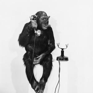 Cómo un pequeño y divertido mono puede salvar la publicidad móvil