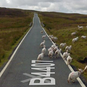 Screenshot Wolle statt Asphalt/ Google Sheep View