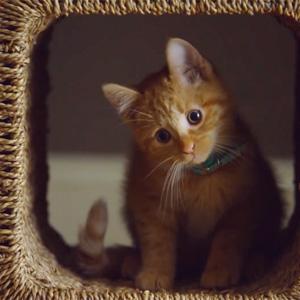 10 spots de gatos que le harán maullar de pura emoción minina