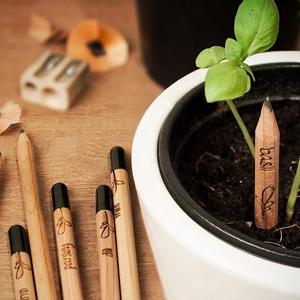 El primer lápiz plantable despierta gran interés entre medios y blogueros