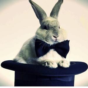 chistera conejo