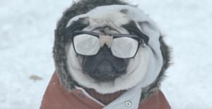 Un adorable perro miope deja atrás su pasado de