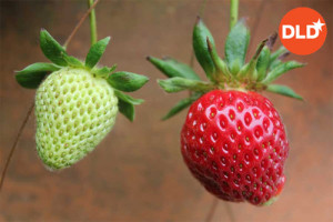 La innovación es como la fruta: si está demasiado
