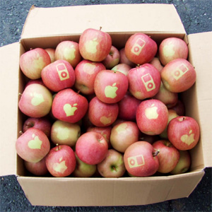 apple 300
