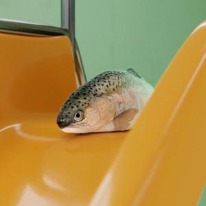 klarna anuncio pez