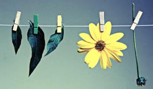 Innovación y sostenibilidad: aprovechar nichos y crecer hacia el mainstream