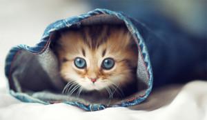 El social media es como un lindo gatito y otros 19 símiles para explicar la vorágine 2.0