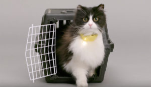 ¿No entiende los maullidos de su gato? Pruebe con el traductor (felino) de esta marca