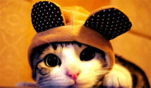 A los internautas la publicidad en el buscador de Google no les da gato por libre